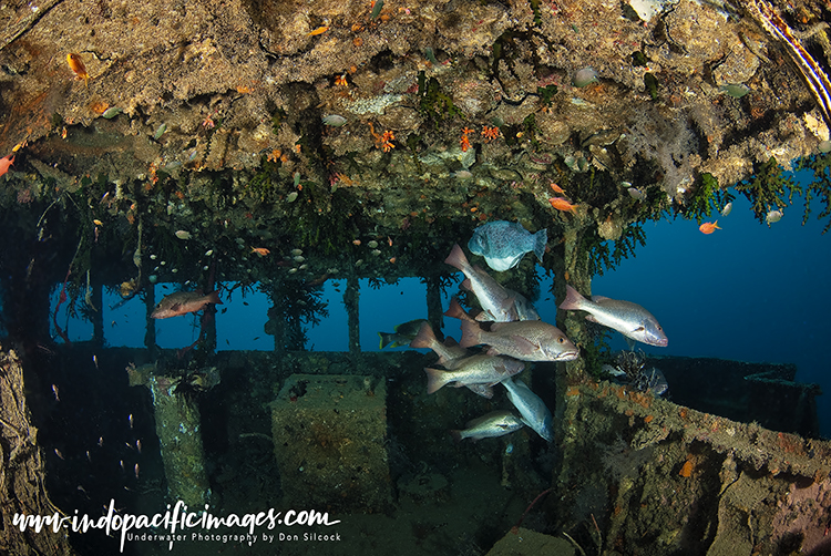 Diving the Pacific Gas Wreck