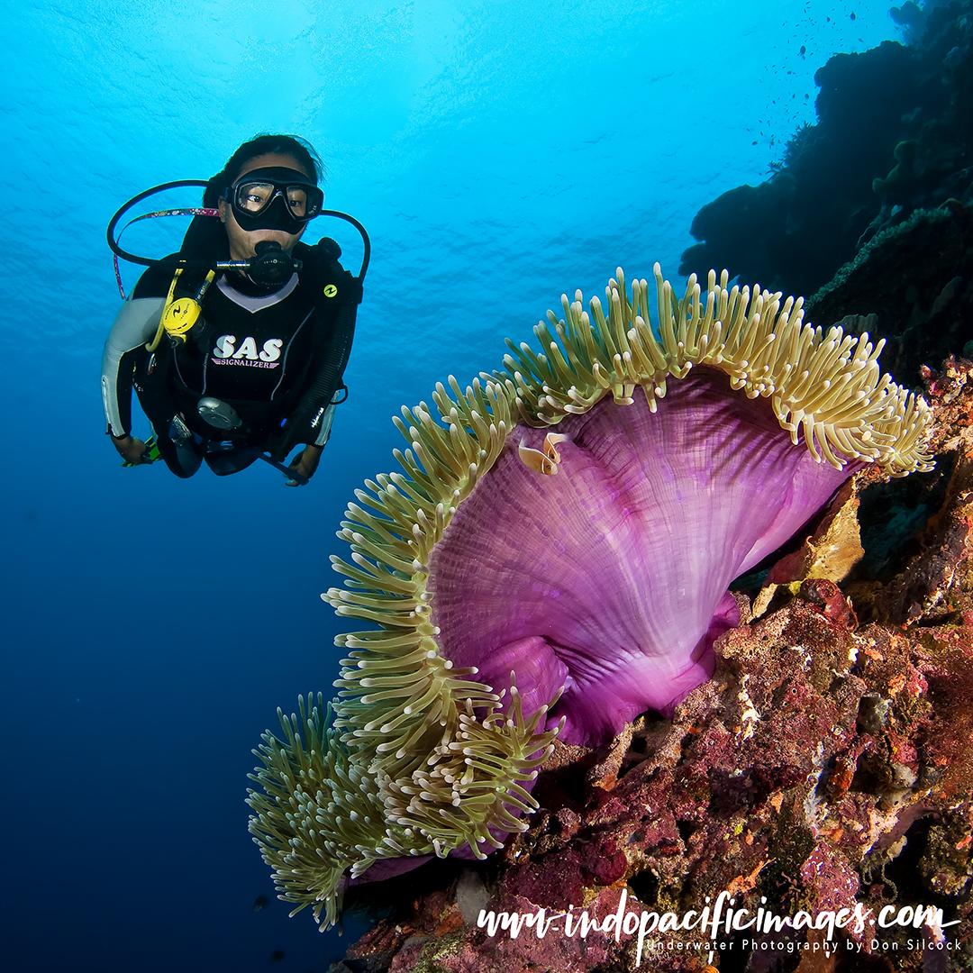 Diving New Guinea Island