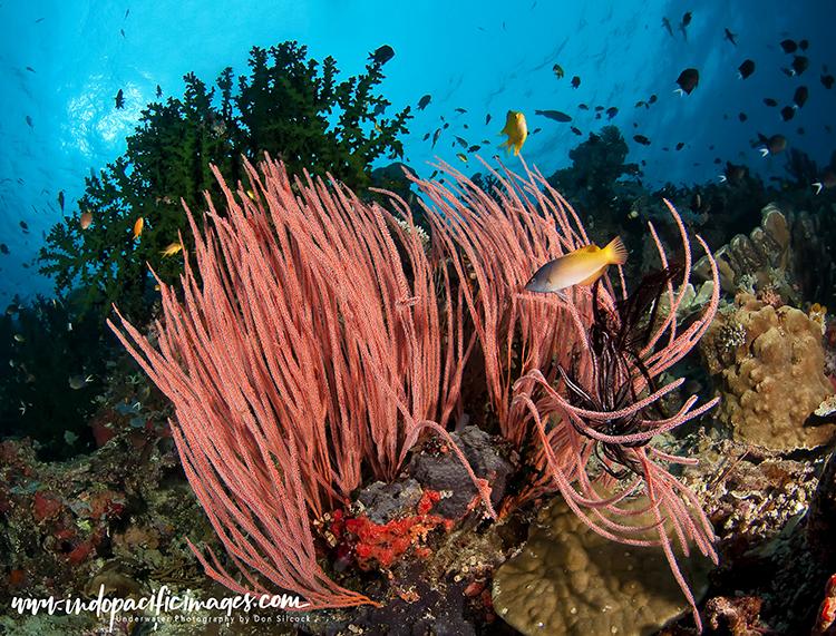Offshore Reefs of Tufi