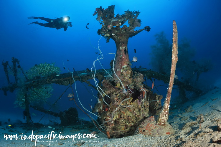 Diving New Ireland