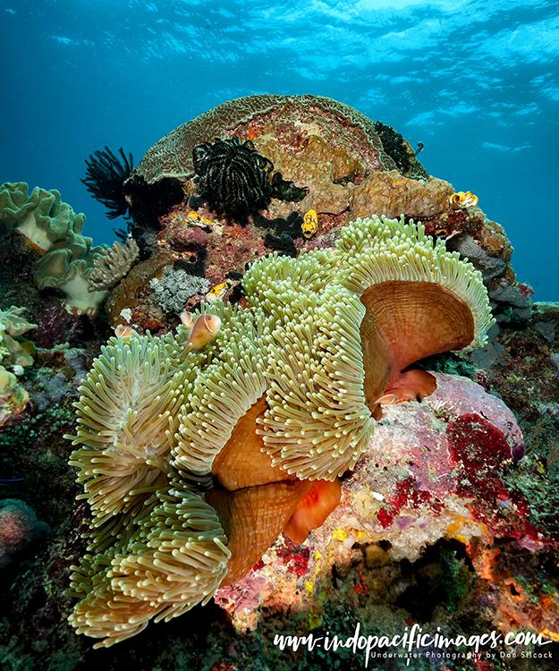 Kavieng dive sites