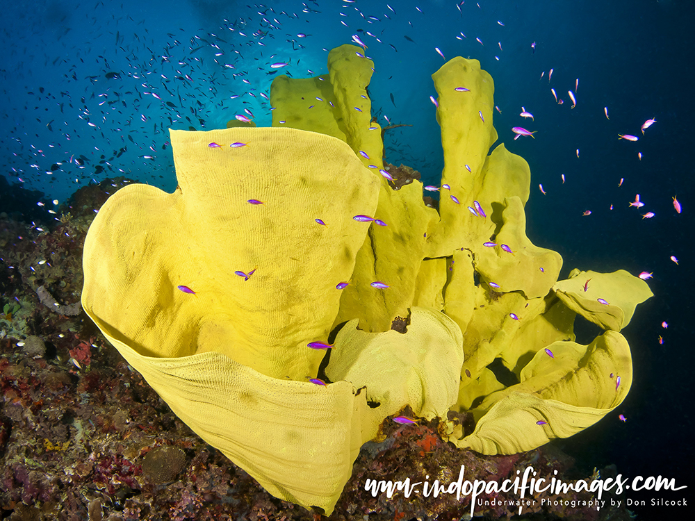 Underwater Photography in Papua New Guinea