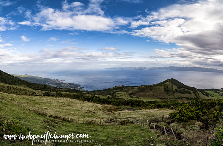 Big Animals in the Azores