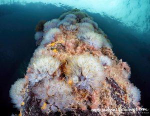 Diving Edithburgh Jetty