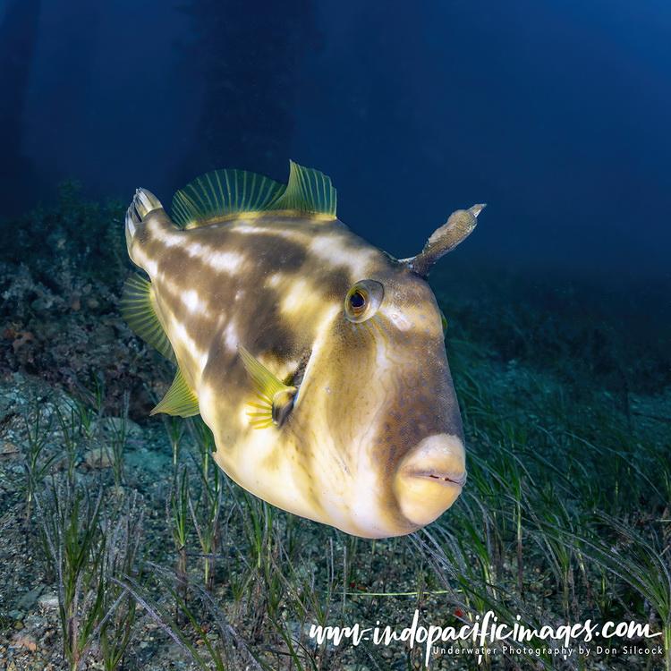 Diving Rapid Bay