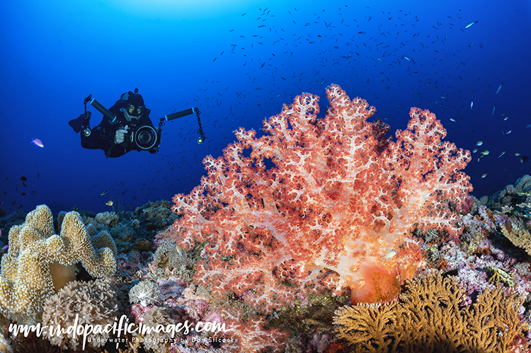 Diving New Britain Island