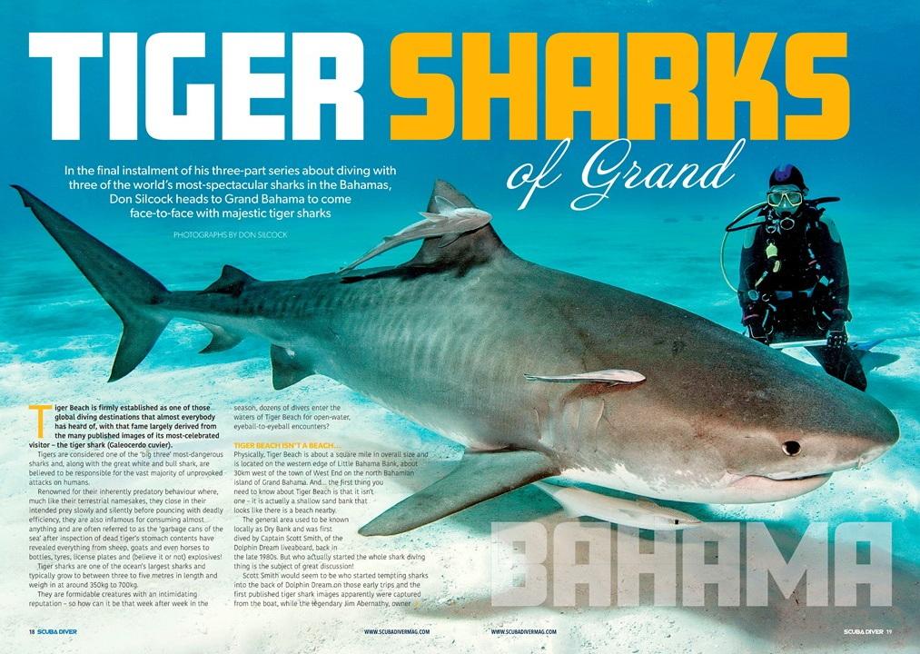 Tiger Sharks of Grand Bahama